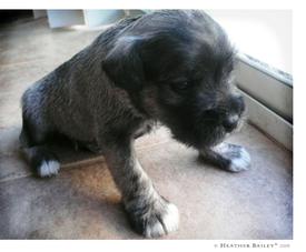 Puppy1_3