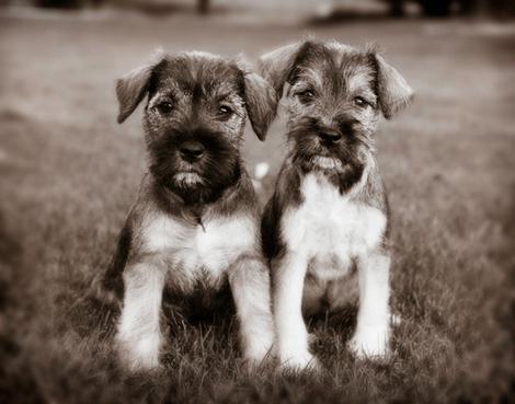 Puppies4_2