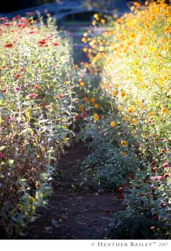 Flowerpath_hbr