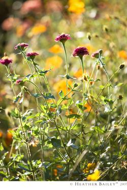 Flowers_hbr
