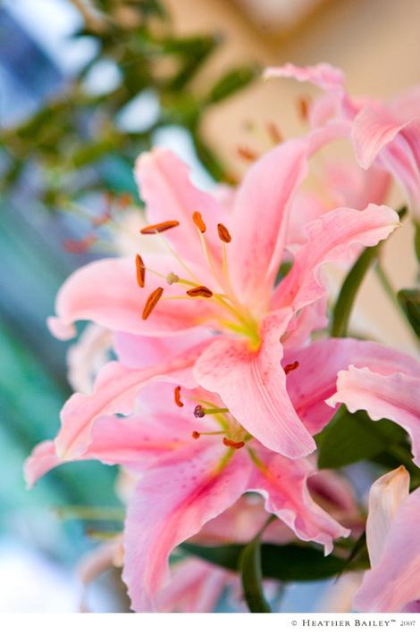 Liliesmakemehappy
