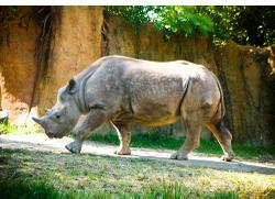 Rhinot